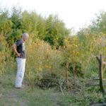 庭の縁スチール